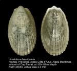 Limatula subauriculata
