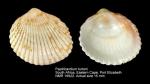 Papillicardium turtoni