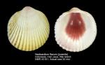 Vasticardium flavum