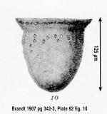 Petalotricha capsa