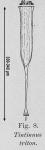 Rhabdonellopsis triton - drawing from original description as Tintinnus triton