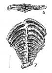 Textularia agglutinans var. folium Parker & Jones. PARALECTOTYPE
