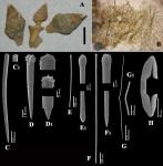 Clathria (Microciona) conchicola