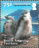 Pygoscelis antarcticus