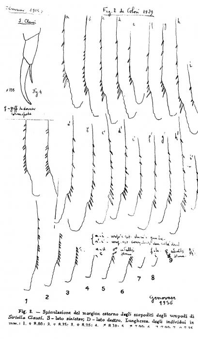 Part: Uropods