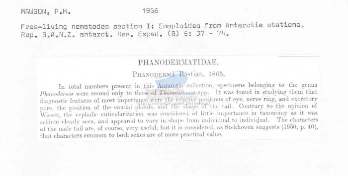 Phanoderma