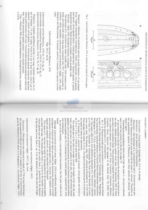 Leptosomatum