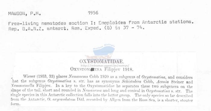 Oxystomina