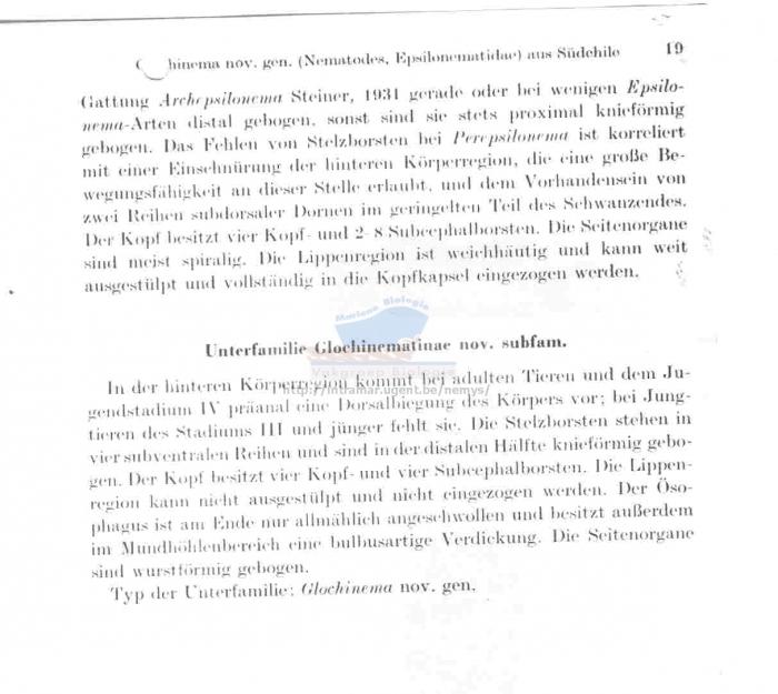 Glochinema