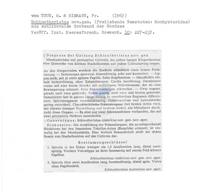 Echinotheristus