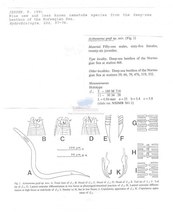 Actinonema grafi