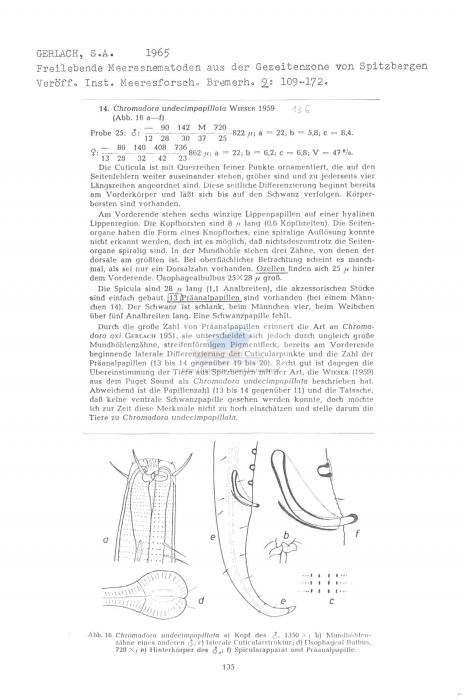 Chromadora undecimpapillata