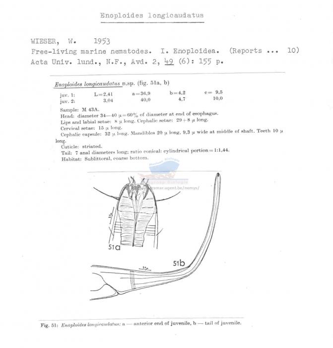 Enoploides longicaudatus