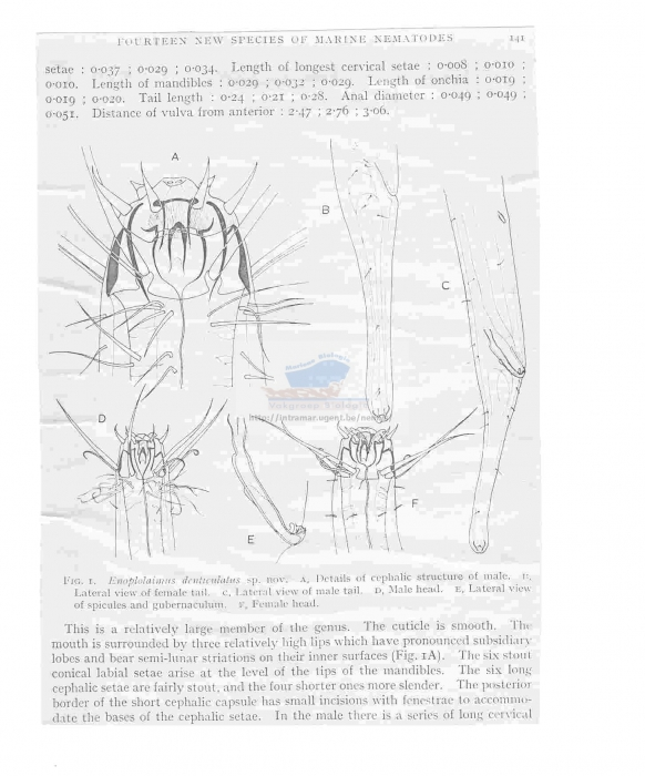 Enoplolaimus denticulatus