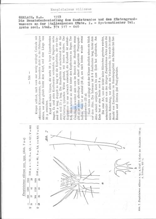 Enoplolaimus villosus