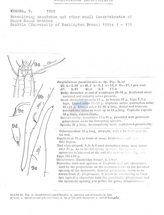 Enoplolaimus paralitoralis