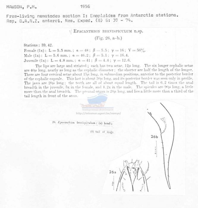 Epacanthion brevispiculum
