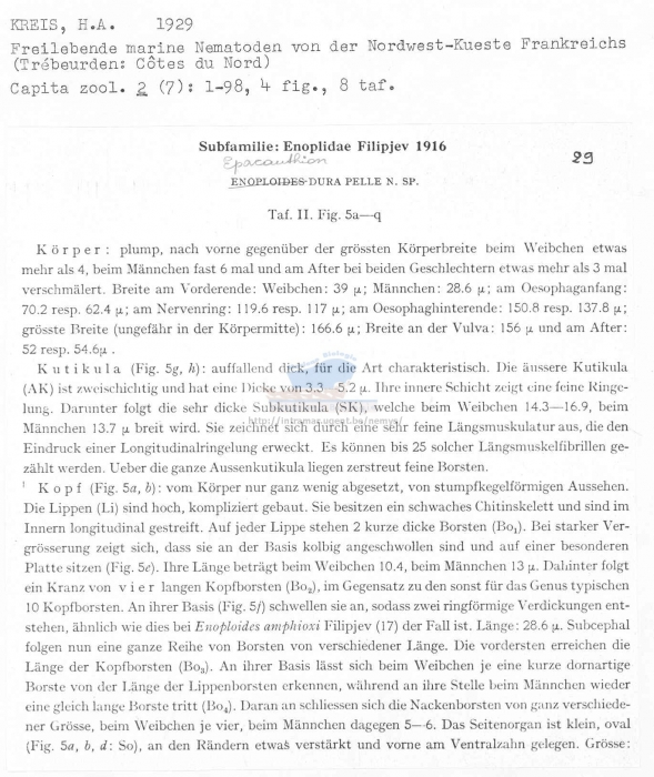 Epacanthion durapelle
