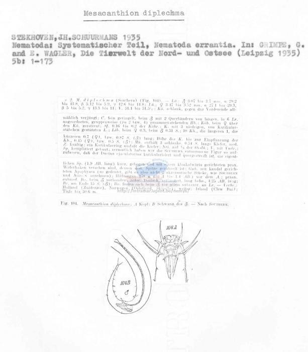 Mesacanthion diplechma