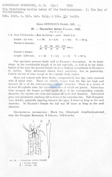 Oxyonchus dubius