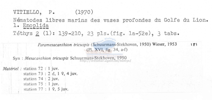 Paramesacanthion tricuspis