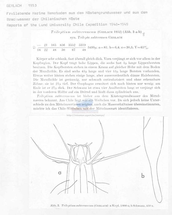 Trileptium subterraneum