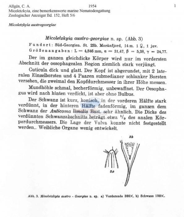 Micoletzkyia austrogeorgiae