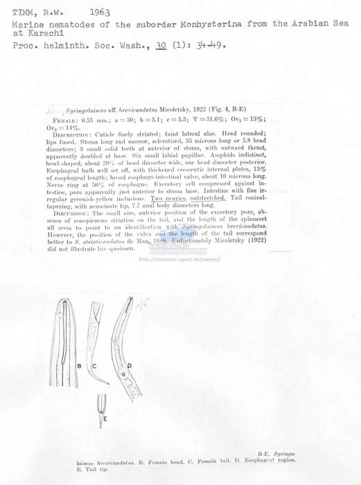 Syringolaimus brevicaudatus