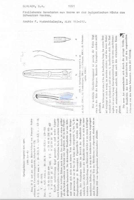 Syringolaimus caspersi