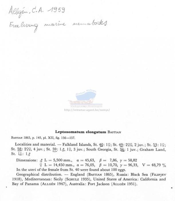 Leptosomatum elongatum