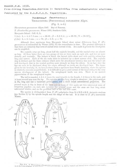 Pseudocella panamaensis
