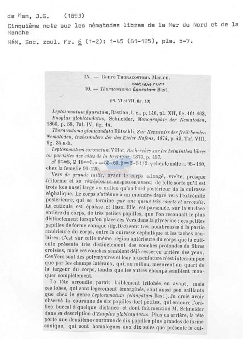 Thoracostoma coronatum
