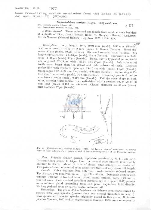 Metoncholaimus scanicus