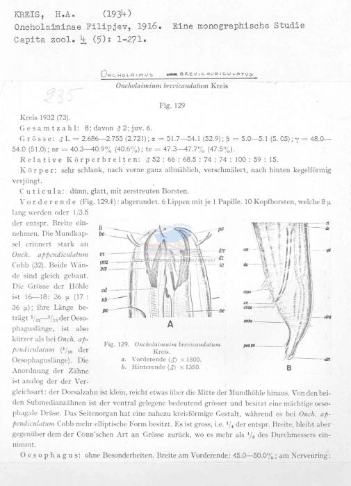 Oncholaimus brevicaudatus