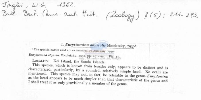 Eurystomina abyssalis