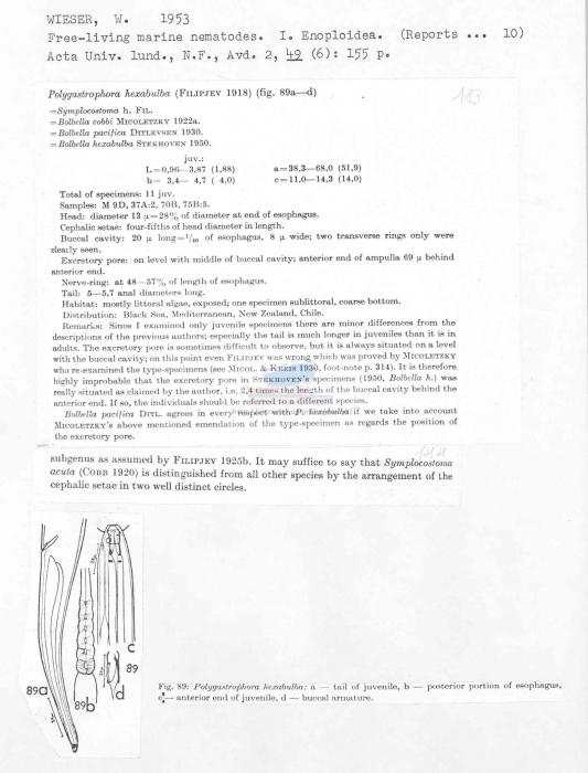 Polygastrophora hexabulba