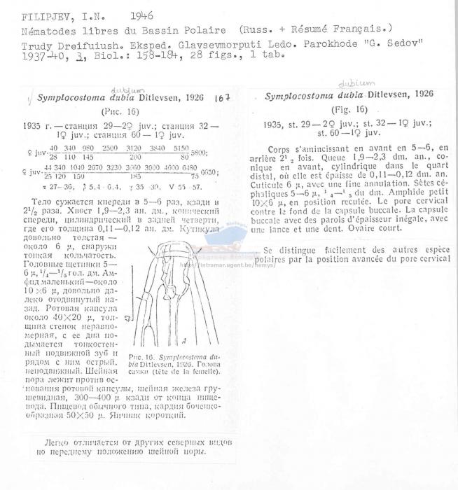 Symplocostoma dubium