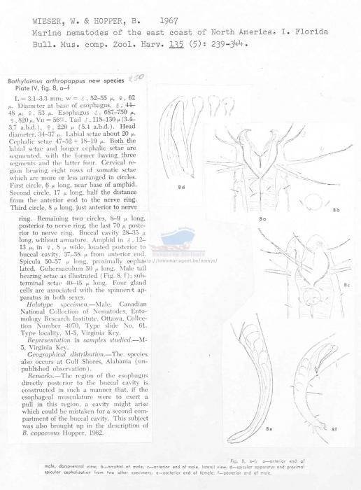 Bathylaimus arthropappus