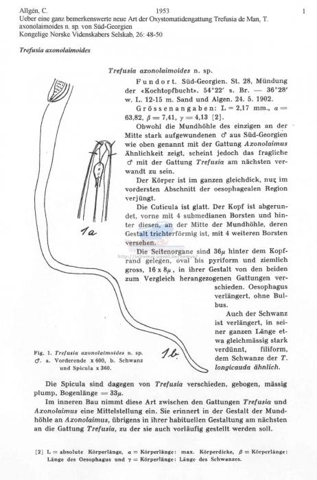 Trefusia axonolaimoides