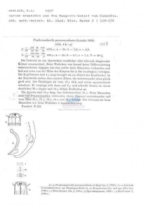Prochromadorella paramucrodonta