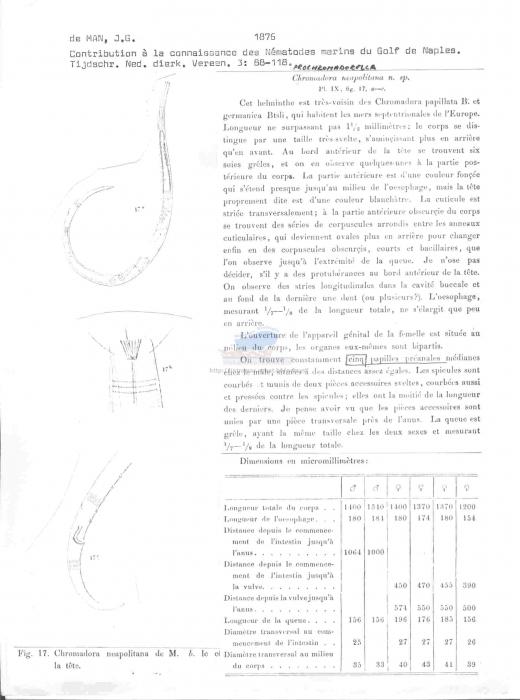 Prochromadorella neapolitana