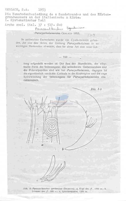 Paracanthonchus tyrrhenicus