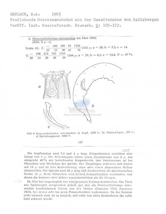 Paracyatholaimus intermedius