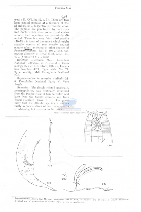 Paracyatholaimus pesavis