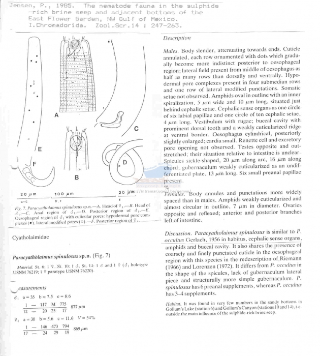 Paracyatholaimus spinulosus