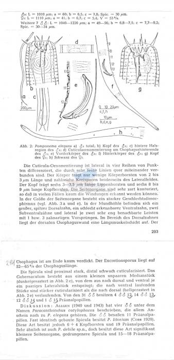 Pomponema elegans