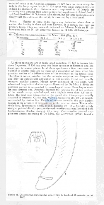 Choanolaimus psammophilus