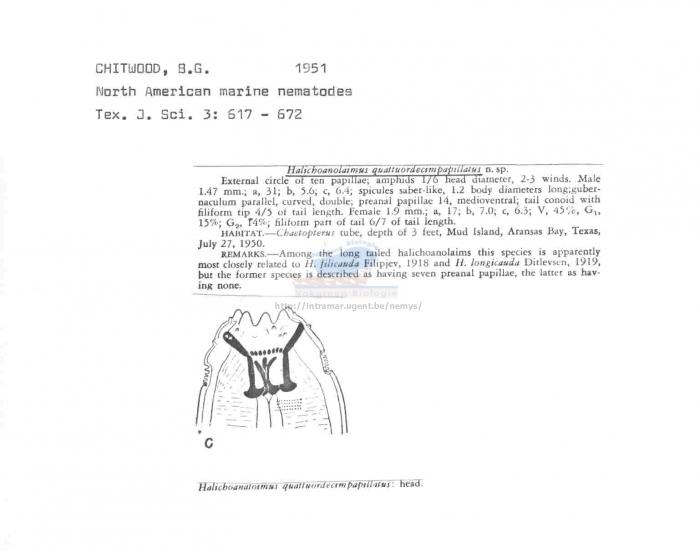 Halichoanolaimus quattuordecimpapillatus
