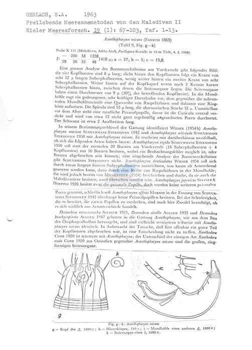 Acanthopharynx micans