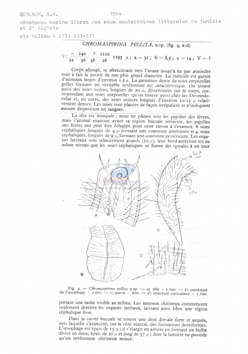 Chromaspirina pellita